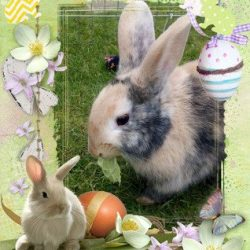 Happy Easter from Hucclecote Holiday Hutches